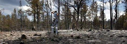 Tips for preparing your backyard for bushfire season