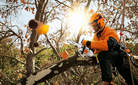 The lightest top-handled chainsaw.